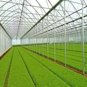 کاربرد لوله گالوانیزه در گلخانه ها